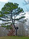 Knotted Pine by FrankieCat