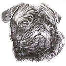 Pug Portrait by BarbBarcikKeith