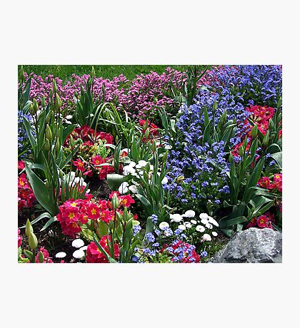 Spring Medley Photographic Print