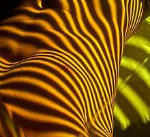 venetian colour by linelight