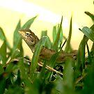 Lizard 2 by sparrowdk