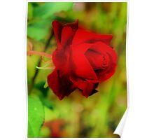 Orton Rose Poster
