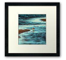 Ocean wonderful birds Framed Print