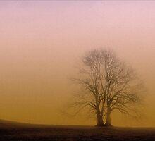 A Harmonious Separation by Nigel Finn