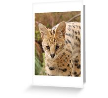 Serval Cat Greeting Card