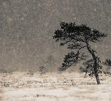 'Under the Snowstorm I' by Petri Volanen
