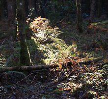 A Shaft of Autumn light by Sandra Oddy