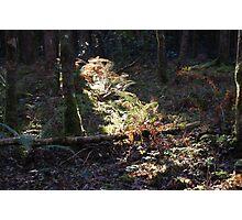 A Shaft of Autumn light Photographic Print