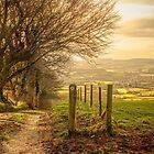 Country Tracks by Nigel Finn