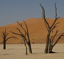 Deadvlei trees by ShotByArlo