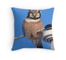 Northern Hawk Owl 4 Throw Pillow