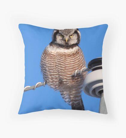 Northern Hawk Owl 4 Throw Pillow