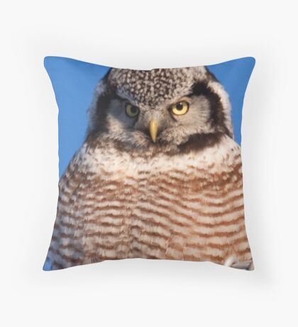 Northern Hawk Owl 6 Throw Pillow