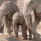 Family of African elephants  by ShotByArlo