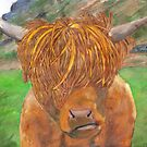Highland Cow by Cantus