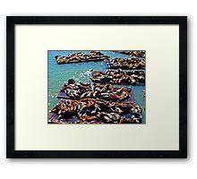 San Francisco Seals Framed Print