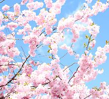 Blooming cherry tree - flower / floral design by ohaniki