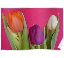 Colorful spring Poster