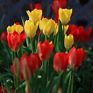 Spring Colors by Brian Dodd