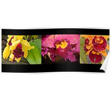 Orchid triptych   Poster