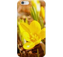 Welcome Springtime  iPhone Case/Skin