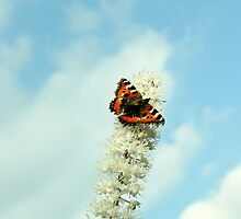 Butterfly In The Sky by DaveMont