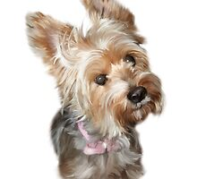 Silky / Yorkshire Terrier by ArtworkByTag
