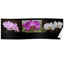 Orchid triptych  2 Poster