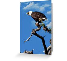 Skagit Valley Eagle 2 Greeting Card
