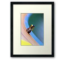 The velodrome cyclist Framed Print