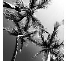 Black & White Palms Photographic Print