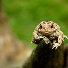 Ribbit by ImagesbyKelly