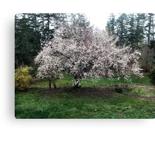 We Shall Have Plums! Canvas Print