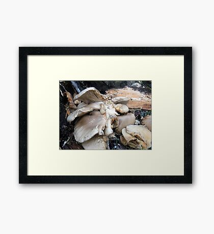 an awful lot of fungi Framed Print