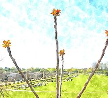 Paestum: archaeological site and flowering tree by Giuseppe Cocco