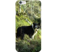 Indy, King of the woods. iPhone Case/Skin