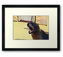Silly Sealion Framed Print