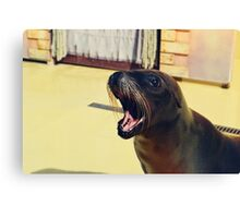Silly Sealion Canvas Print