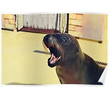 Silly Sealion Poster