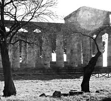 Paestum: temple through the trees by Giuseppe Cocco