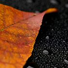 Autumn Rain by janetlee