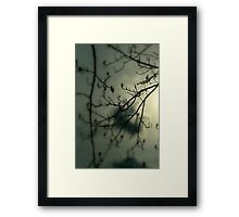 Waiting for Spring Framed Print