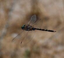 Dragon Fly by Michael Eyssens