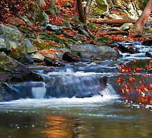 Stream in fall by reneh
