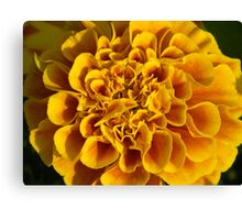 yellow flower poster print closeup macro Canvas Print