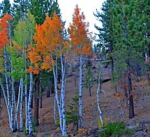October Birch by Leona Bessey