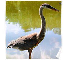 Beautiful bird... Poster