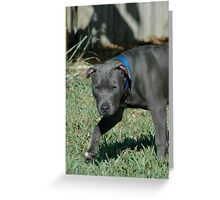 blue pit bull Greeting Card