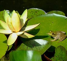 The Lily and the Frog by AGODIPhoto