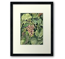 Winery Tour Framed Print